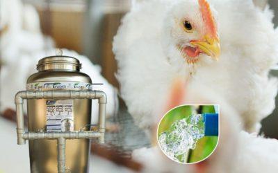 Tratamento de Água para Granjas e Avicultura 🐤🐔