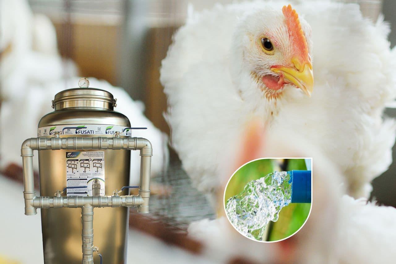 Tratamento de Água para Granjas e Avicultura 🐤 🐔